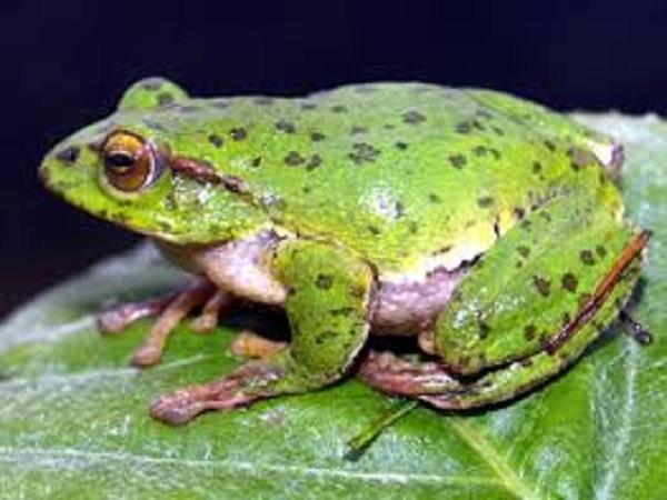 Nằm mơ thấy ếch đánh con gì ? Là điềm hên hay xui ?