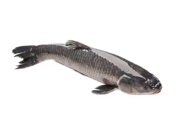 Nằmmơ thấy cá lóc điềm báo gì?